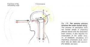 sensory-process